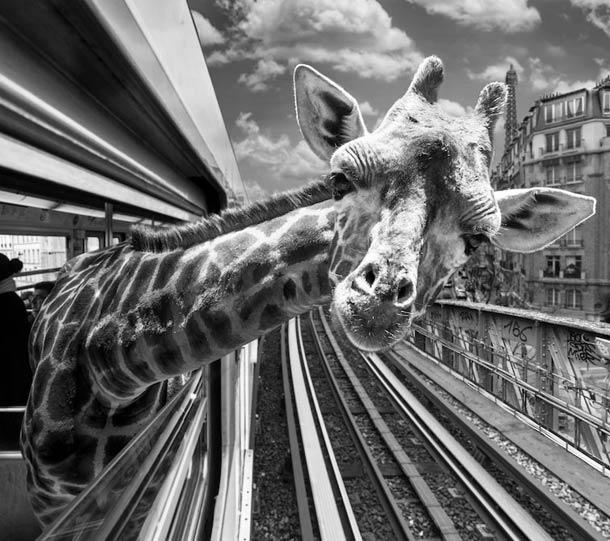 Des animaux sauvages dans le métro Parisien