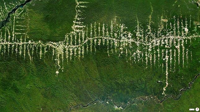 deforestation amazonie bresil