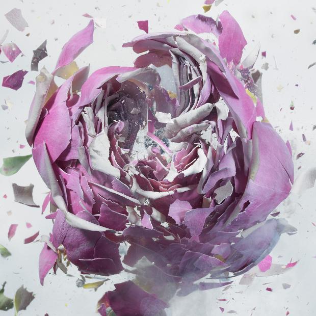 fleurs-7