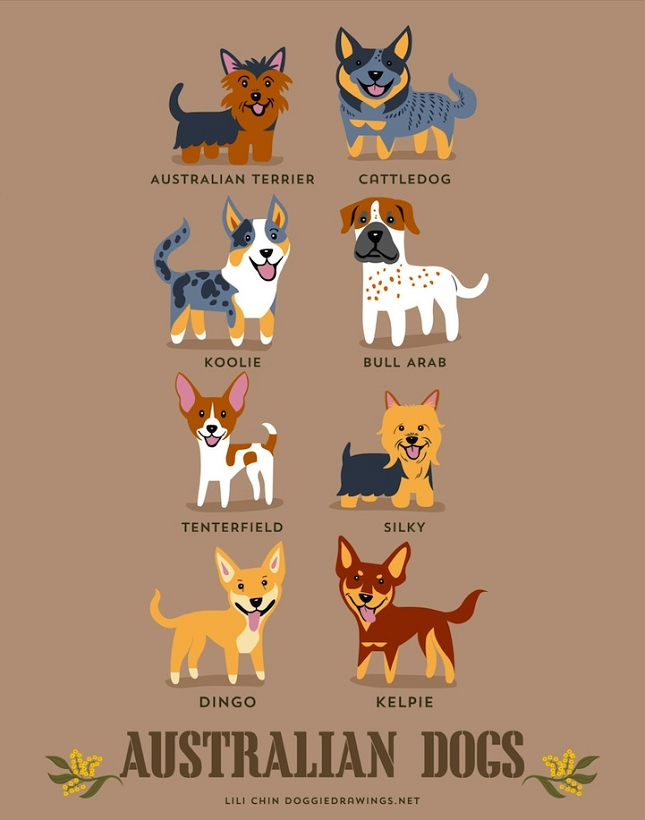 races-de-chiens-monde-1