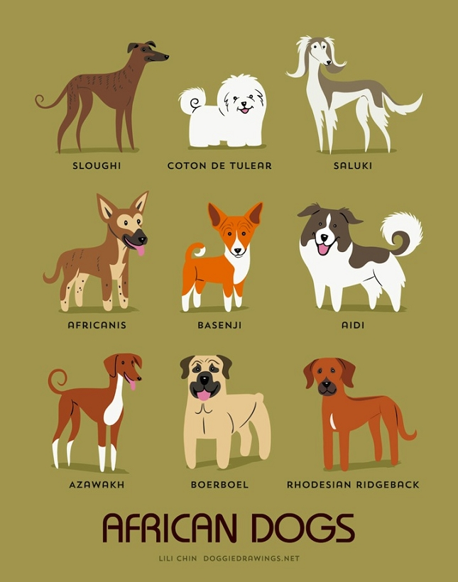 races-de-chiens-monde-3