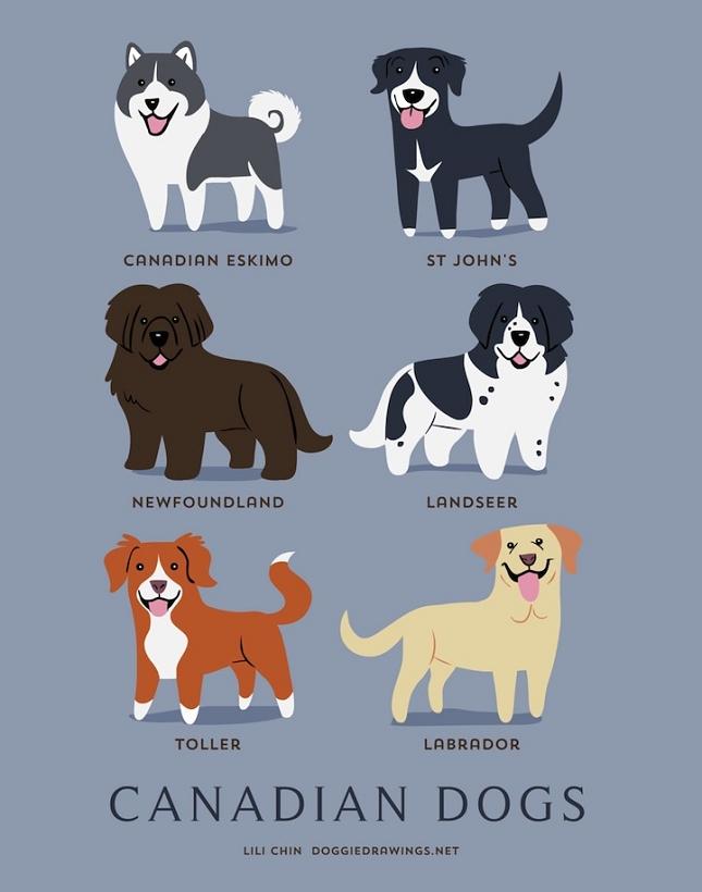 races-de-chiens-monde-4