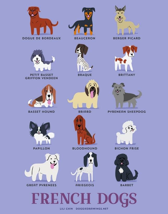 races-de-chiens-monde-5