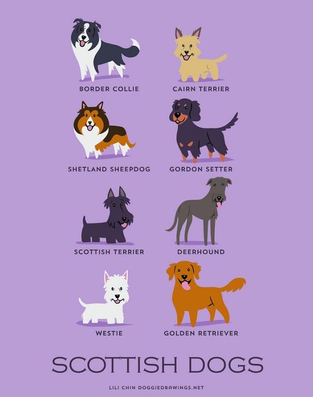 races-de-chiens-monde-6