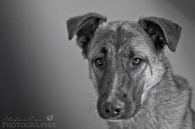 portrait-animalier-5