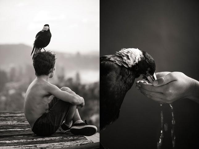 Apprivoiser-oiseau-pie-4