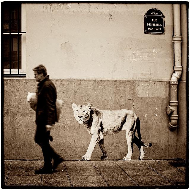 La Lionne rue des Blancs Manteaux sophie photographe - Rues de Paris