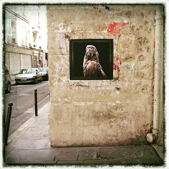 Le Peroquet rue des Blancs Manteaux Sophie photographe