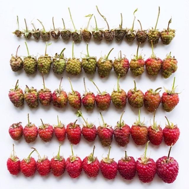 composition-fruit-legume-art12