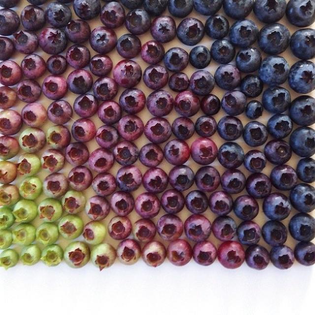composition-fruit-legume-art13