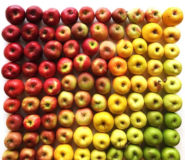 composition-fruit-legume-art14