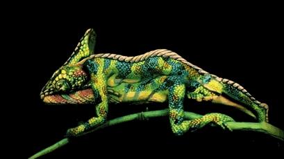 peinture-corps-animal-cameleon-1