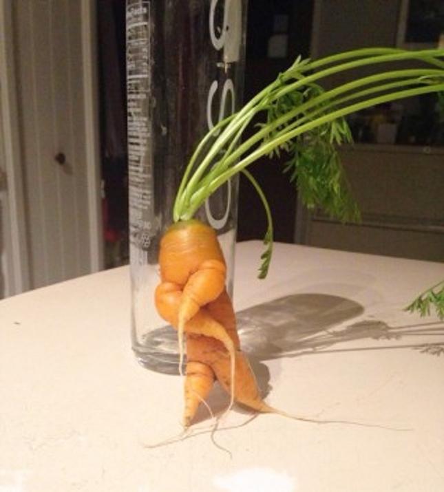 Pareidolie -legume-fruit-16
