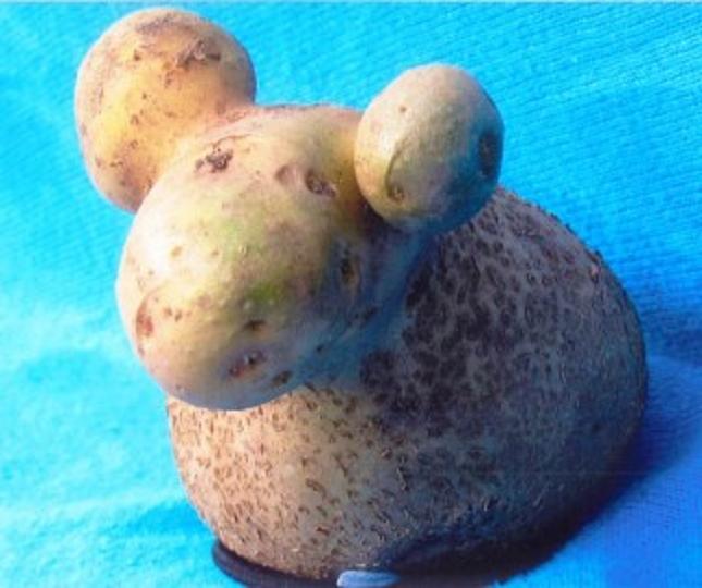 Pareidolie -legume-fruit-24