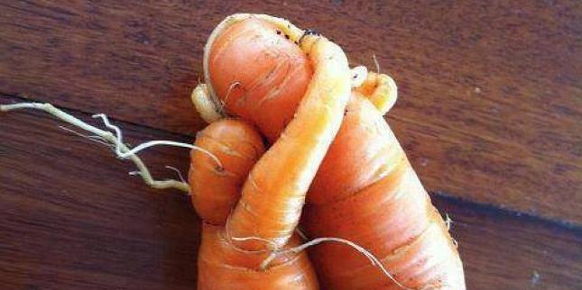 Pareidolie -legume-fruit-29