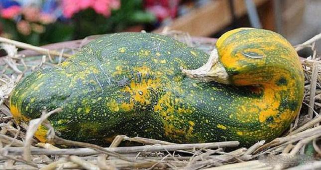 Pareidolie -legume-fruit-5