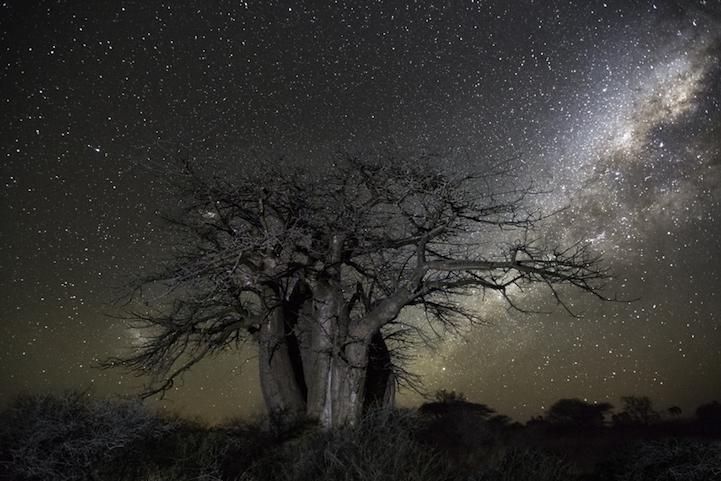 arbres-centenaires-1