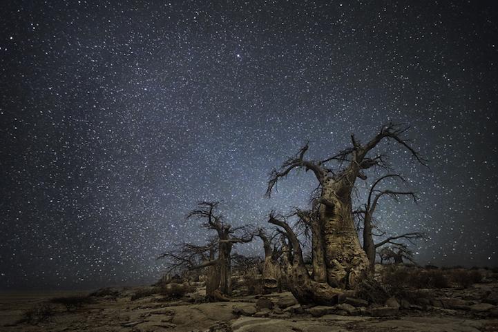 arbres-centenaires-10