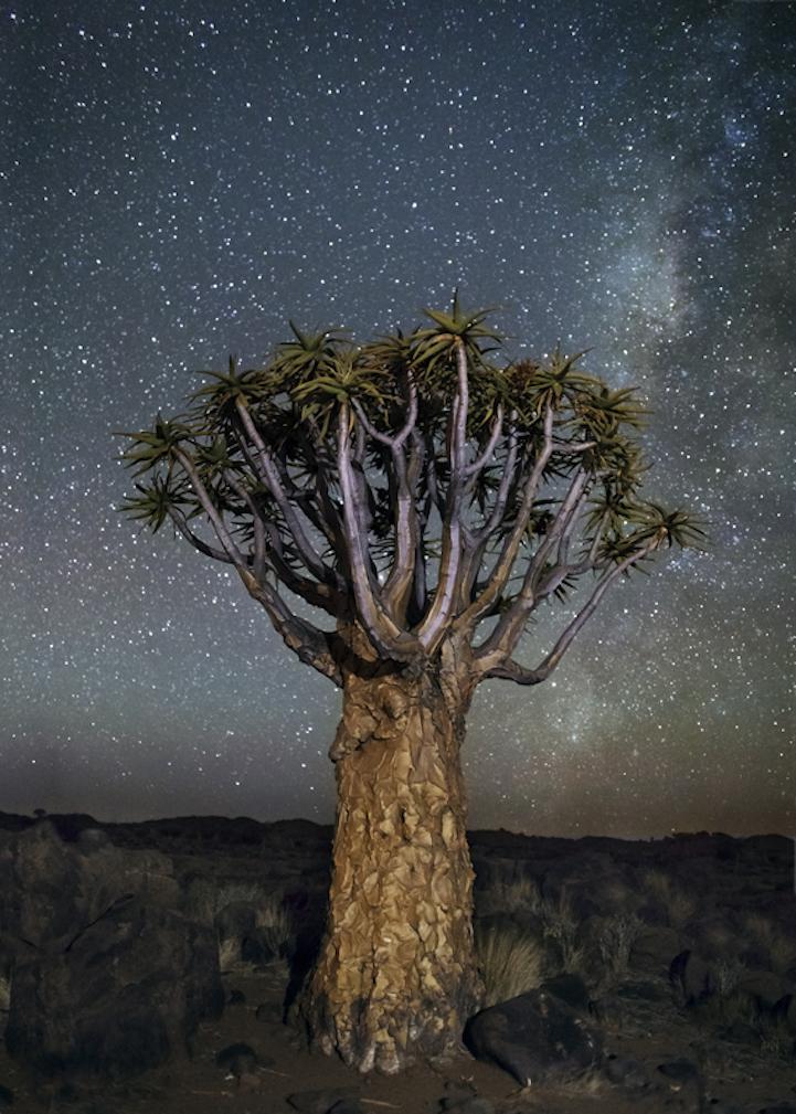 arbres-centenaires-11