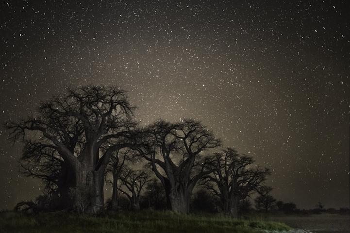 arbres-centenaires-12