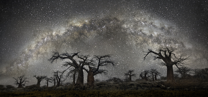 arbres-centenaires-13