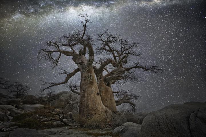 arbres-centenaires-14