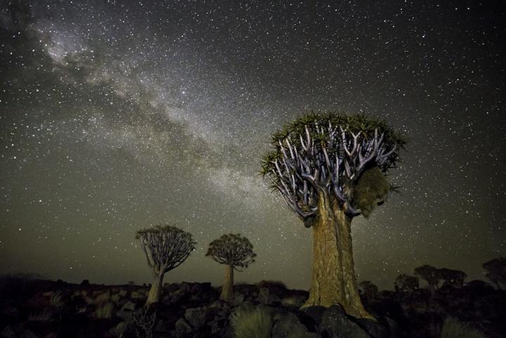 arbres-centenaires-2