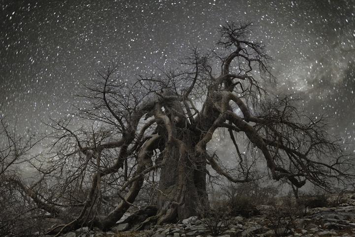 arbres-centenaires-3
