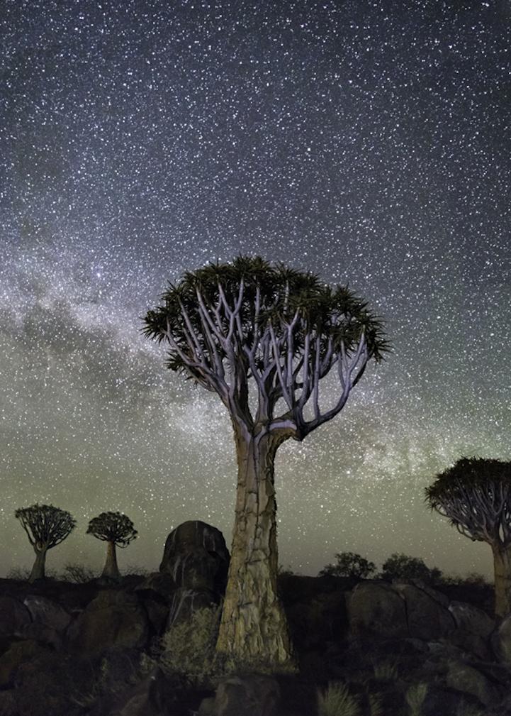 arbres-centenaires-4