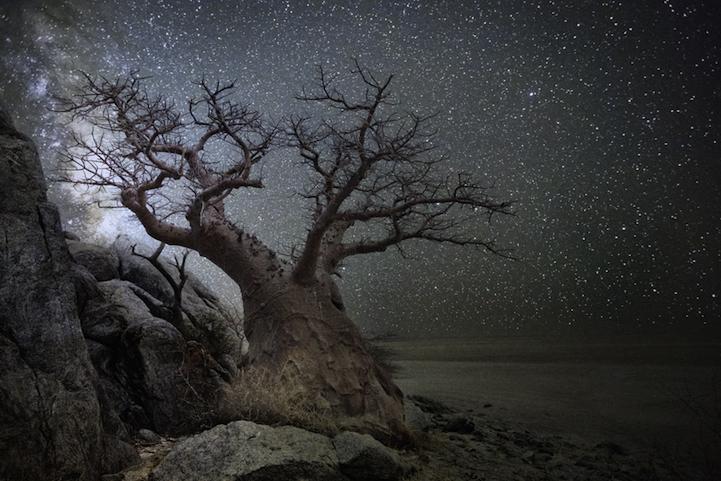 arbres-centenaires-6