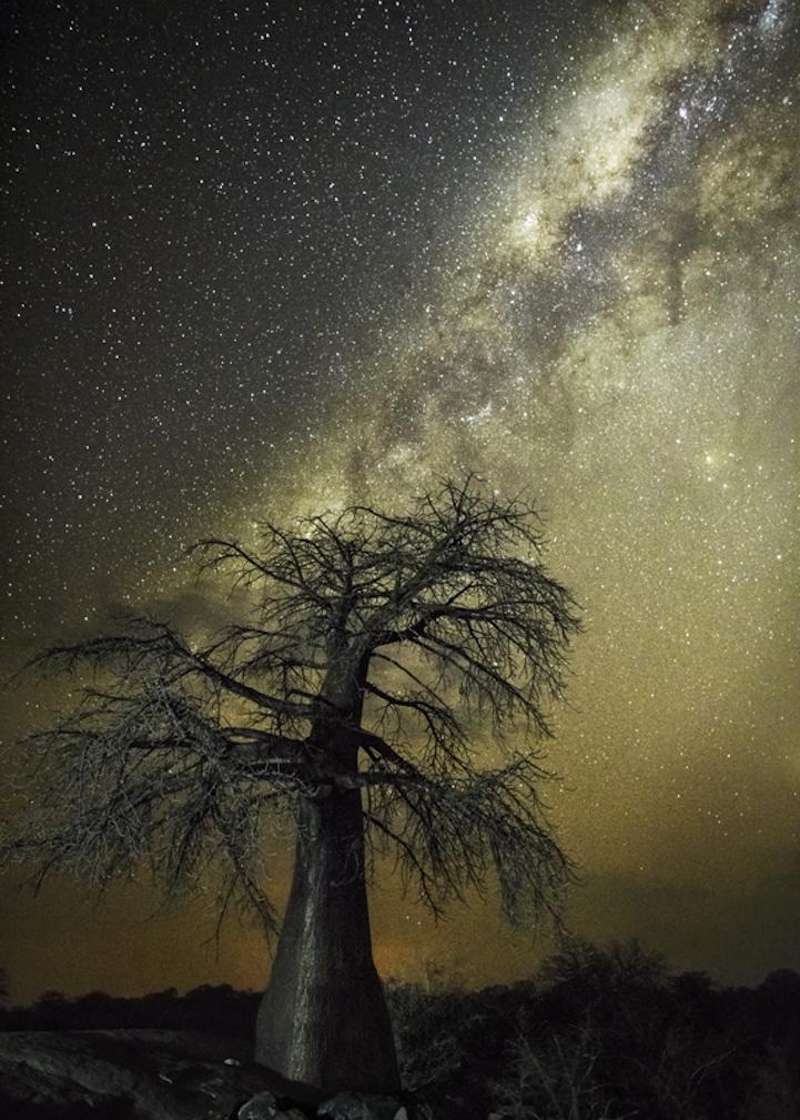 arbres-centenaires-9
