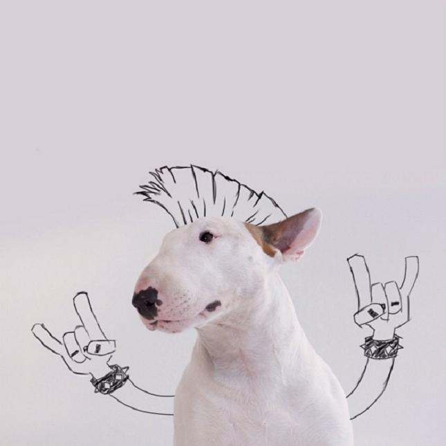 Bull-Terrier-Photo-chien-10