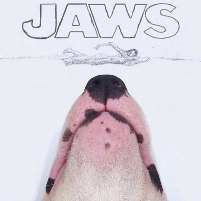 Bull-Terrier-Photo-chien-2