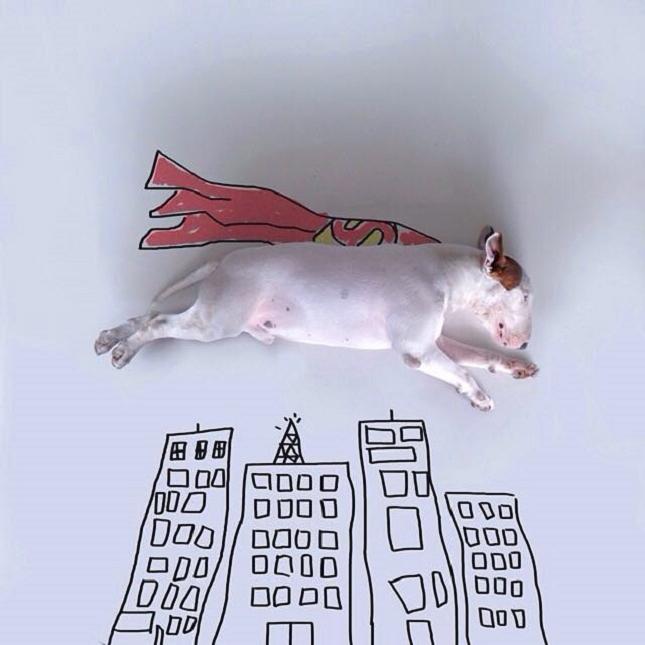Bull-Terrier-Photo-chien-3