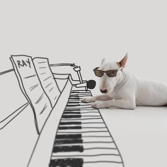 Bull-Terrier-Photo-chien-4