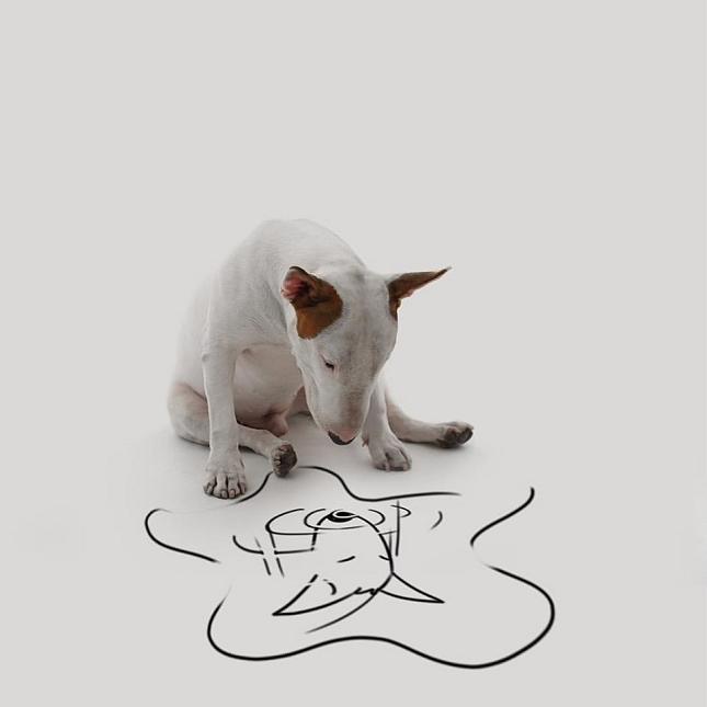Bull-Terrier-Photo-chien-7