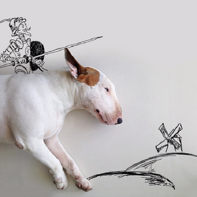 Bull-Terrier-Photo-chien-9