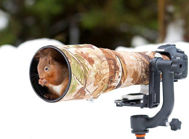 Photographie-animaliere-10