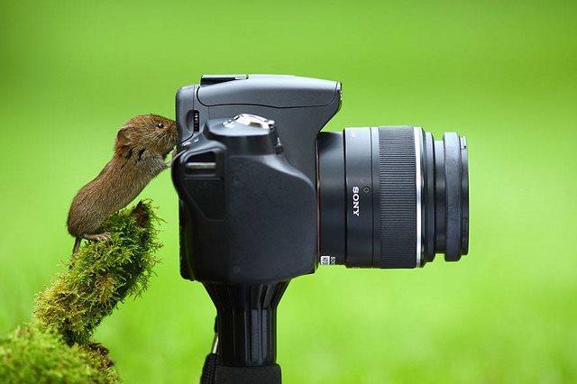 Photographie-animaliere-11