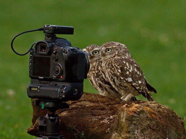 Photographie-animaliere-16
