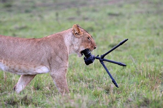 Photographie-animaliere-17