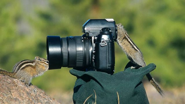 Photographie-animaliere-2
