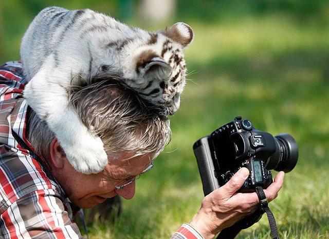 Photographie-animaliere-24