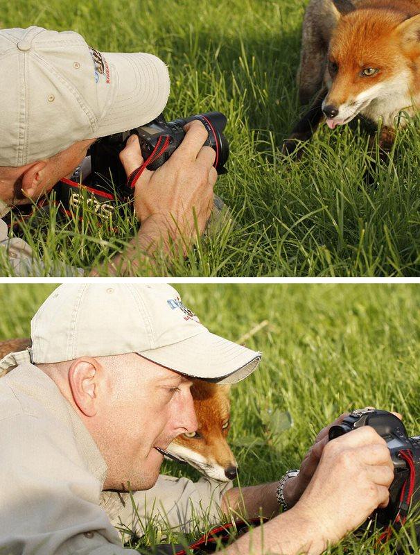 Photographie-animaliere-26