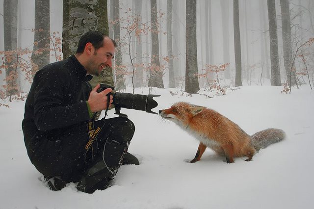 Photographie-animaliere-29