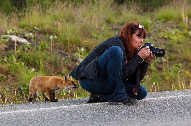 Photographie-animaliere-34
