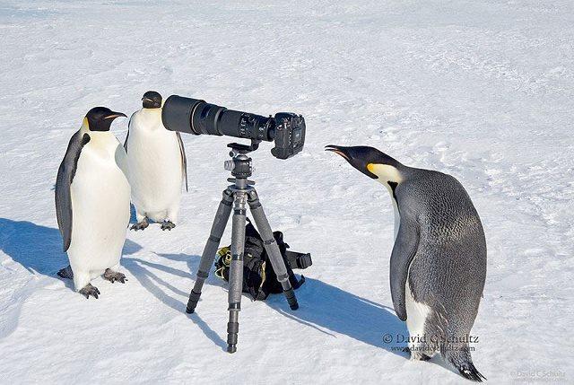 Photographie-animaliere-6