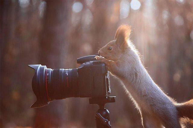 Photographie-animaliere-7