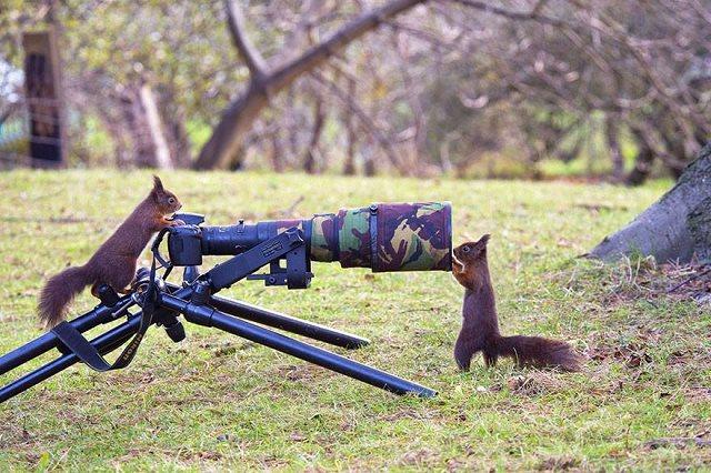 Photographie-animaliere-8