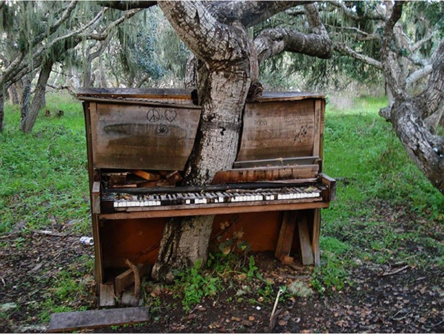 Un arbre dans un piano - Californie